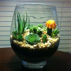 Easy to make terrarium.  Old fish bowl Pea gravel Perlite  Cactus soil  Your choice succulent plants!