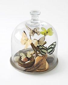 Bell Jar Keepsake - Martha Stewart Home & Garden Glass Bell Jar, The Bell Jar, Bell Jars, Cloche Decor, Martha Stewart Home, Tiny Treasures, Apothecary Jars, Home And Garden, Dream Garden