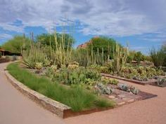 You'll quickly dispel any notion of a lifeless and colorless desert landscape when visiting the Desert Botanical Garden in Phoenix.