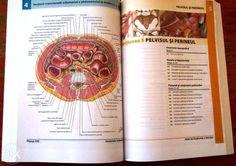 Atlas Anatomie a Omului F.H. Netter a 5-a (lb romana) - NOU Cluj-Napoca - imagine 1