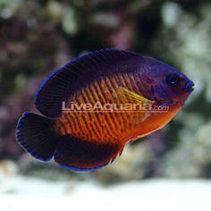 36 Best Cool Marine Fish Images Marine Aquarium Saltwater Tank