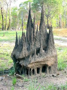 Termites in Zimbabwe build gigantic mounds inside of which they farm a fungus that is their primary food source. The fungus must be kept at exactly 87 degrees F, while the temperatures outside range from 35 degrees F at night to 104 degrees F during the day. The termites achieve this remarkable feat by constantly opening and closing a series of heating and cooling vents throughout the mound over the course of the day.