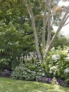 Use plantings to buffer the yard from the street. Shown: Japanese maple underplanted with doublefile viburnum, hydrangeas, and 'Francee' hosta   Photo: John Gruen