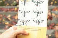 L'arte di collezionare mosche di Frederik Sjöberg  - Little Miss Book
