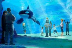 SeaWorld Won't Free Its Whales, but It's Building Them Bigger Tanks