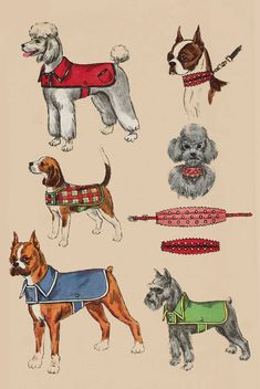 Vintage 1960s Dog Coat Pattern, Dog Collar Pattern, Pet Collar Pattern Simplicity 4219 60s Sewing Pattern Size Small Dog Coat by sandritocat on Etsy #DogCoats