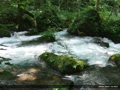"""Rapids through the forest of """"Buna"""" trees and mossy rocks in Oirase Gorge, Japan. Japanese Landscape, Waterfall, Rocks, Trees, River, Outdoor, Outdoors, Tree Structure, Waterfalls"""