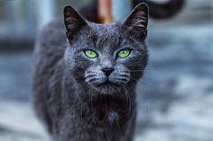 Matteo Viviani: Artist Website. Green Eyes, available at FineArtAmerica. #art #fineart #photography #fineartamerica #cat #eyes #italy