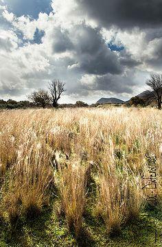 John Ageos | Photography | Greece Vineyard, Greece, Photography, Outdoor, Greece Country, Outdoors, Photograph, Vine Yard, Fotografie