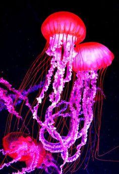 Safari Petit nudibranche Jouet en plastique Wild Zoo Marine Sea Slug Reef Animal Nouveau