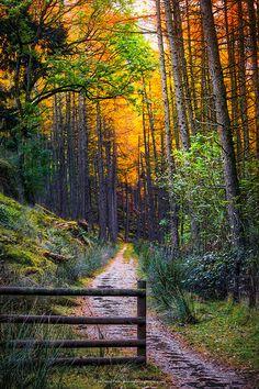 Colourful lane at the Elan Valley