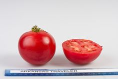 Arkansas Traveler heirloom tomato, grown at Rutgers NJAES research farms.