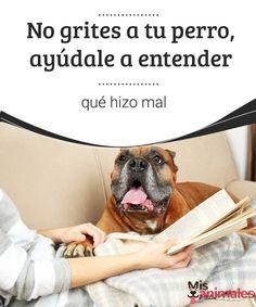 No grites a tu perro, ayúdale a entender qué hizo mal No grites a tu perro. De esta forma, no resolverás los problemas y quizá contribuyas a empeorarlos. Intenta mejor ignorar lo malo y recompensar lo bueno. #gritar #perro #enseñar #consejos