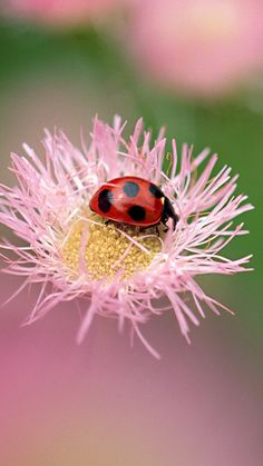 1080x1920 Wallpaper flowers, ladybug, insect, field