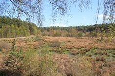 """Biesenrumpf. Bestandteil des Biosphärenreservates """"Schorfheide-Chorin"""". [2013]"""