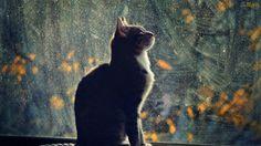 Papel de Parede Gato Esperando