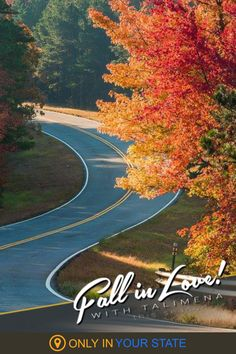 Discover one of the best fall road trips in Oklahoma as you travel along the Talimena Scenic Byway. The beautiful drive comes alive with colorful foliage! Enjoy the nature that surrounds you as you pass through the Ouachita National Forest and past magical mountains. You can spend the night camping in cozy, charming cottages along the road and turn this into a weekend getaway. Oklahoma Usa, Local Attractions, Beautiful Sites, Haunted Places, Family Adventure, National Forest, Weekend Getaways, Vacation Spots, Day Trips