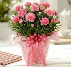 Amazing Flowers, Pink Flowers, Beautiful Flowers, Window Box Flowers, Flower Boxes, Large Flower Arrangements, Good Morning Flowers, Floral Centerpieces, Flower Decorations