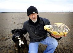 """""""It smells like horse manure and looks like a dirty beach rock but this lump of 'floating gold' could pocket one man over $135,000. The unusual 'stone' is believed to be a piece of rare and valuable whale vomit, or ambergris, an in-demand ingredient used in perfumes such as Chanel No.5. Lancashire resident Ken Wilman discovered the 6.6 pounds lump while out walking his boxer dog Madge on Morecambe beach. 'I didn't actually realize what it was at first, I couldn't understan..."""