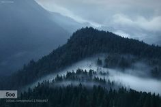 Creeping In - Pinned by Mak KhalafI N S T A G R A M Bavarian Alps L A N D S C A P E P H O T O G R A P H Y facebook Landscapes alpsbavariabayernfogforestgermanymistmountainsnebelrainywaldwood by kilianschoenberger