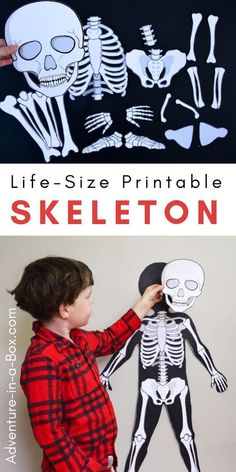 Make a life-size paper skeleton for kids to study anatomy the hands-on way with . - Make a life-size paper skeleton for kids to study anatomy the hands-on way with . Make a life-size paper skeleton for kids to study anatomy the hand. Kid Science, Kindergarten Science, Science Activities, Preschool Activities, Science Crafts For Kids, Preschool Printables, Human Body Activities, Human Body Crafts, Skeletal System Activities