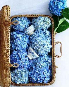 67 Super Ideas For Flowers Wedding Bouquet Blue Inspiration White Wedding Flowers, Big Flowers, Flower Bouquet Wedding, Amazing Flowers, White Flowers, Beautiful Flowers, Tropical Flowers, Colorful Flowers, Purple Flowers