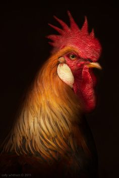 Impressive Portraits of Fowls by Cally Whitham - CAT IN WATER