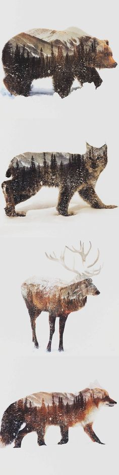 Norwegian artist Andreas Lie uses double exposure photos to capture the essence of animals in arctic landscapes. This is one of my favorites, I'm a huge fan of nature and the environment and these animals show the environemnt they live in. Digital Art Illustration, Landscape Illustration, Arctic Landscape, Landscape Art, Landscape Paintings, Double Exposure Photo, Lightroom, Photoshop, Drawn Art