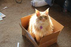 Supprise in a Box by KittyKarlson.deviantart.com on @deviantART
