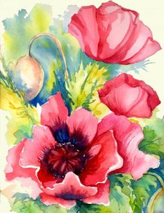 beautiful  poppies of peggy wilson