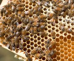 How Honey Could Cure Your Allergies - HowStuffWorks