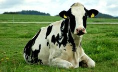 You'll Never Guess Why New Hampshire Farmers Object to Proposed Bestiality Ban | Care2 Causes