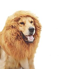 Tinksky Animale domestico cane leone criniera parrucca collare per Halloween Party Brown