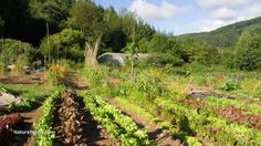 Gardening when your life depends on it: five food production strategies that may keep you alive during hard times...