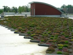 Green Roof Trays over TPO Membrane