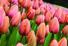 cornice a fiori - Cerca con Google