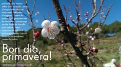 bondia #primavera! +amanides +cremes de pastanaga i pèsols +peres al vapor amb maduixots +coccions lleugeres  http://quecuinoavui.com/2014/03/20/bon-dia-primavera/