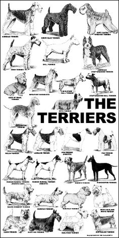The Terriers Or as Mag says TERRIORS!