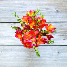 Surprise your mom on Mother's Day with these stunning red and orange freesia. Ships next day from our farms on the California coast to your recipient's door.