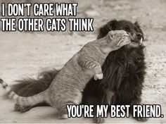 Cute and Funny Pictures and more: Dog and Cat Best Friends