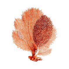 Ventilateur de mer corail rouge Orange nautique Vintage Style Art Print Beach House décor