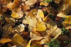 Wege zum laubholzreicheren Wald. Plants, Timber Wood, Plant, Planets