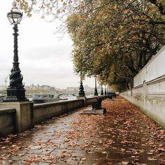 Seriously crunchy leaves underfoot - earlier along the #Thames #autumninlondon