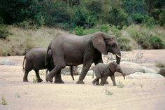 Relish in your last early morning game drive at Kruger Park with the Classic Cape & Safari - 10 day Self Drive Itinerary  http://www.africanwelcome.com/tours-and-safaris-south-africa-botswana-namibia-vicfalls/self-drive-holidays-south-africa/10-day-self-drive-cape-town-winelands-kruger-park
