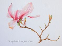 """""""The magnolia was the most joyous in Spring"""", by Kristen Johns"""