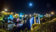 Newfoundland, Windsor, Moonlight, Art Prints, Rose, Art Impressions, Roses, Newfoundland Dogs, Pink