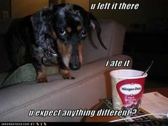 funny doxie are food funny meme