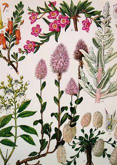 Vintage Flowers Prints 132 (by ninainflorida)
