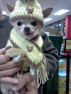 chihuahua. I love the chi scarf and hat and the tongue hanging out! Cute!!