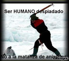 NO AL MALTRATO ANIMAL!!!!!